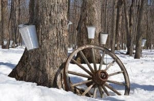 It's Maple Syrup Time in Ottawa again!